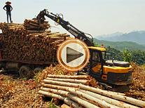 贵州抓木机工作视频