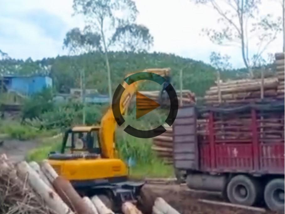 宝鼎BD80W抓木机工作视频介绍-宝鼎轮式抓木机