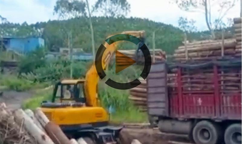 宝鼎80抓木机工作视频
